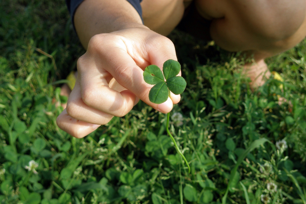 Image of person picking a four leaf clover